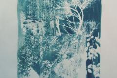 Cyanotype Over Shadowed