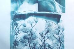 Cyanotype Tree Top