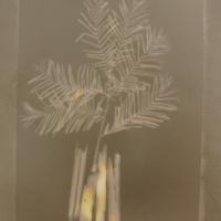 Lumen Louisiana Cypress 30th Parallel