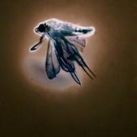 Lumen Negative Fairy Bug Princess