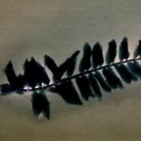 Lumen Negative Fern