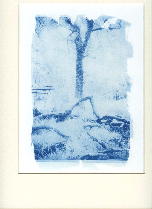 Cyanotype Morning Light