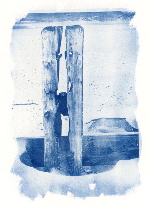 Cyanotype Trapped