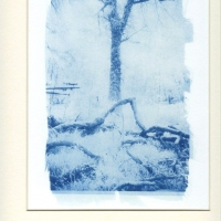 Cyanotype Morning Light