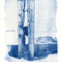 Cyanotype Trapped