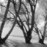 Lith print Coastal Trees