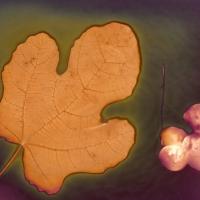Lumen print Garden Art