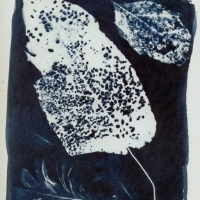 Photogram Lacey 1