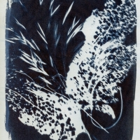 Photogram Lacey 2