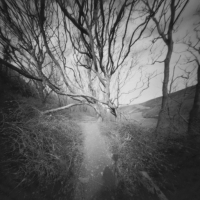 Pinhole Blegberry Wood