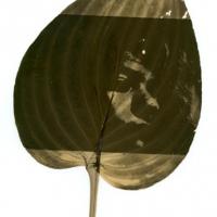 Chlorophyll Dark moving