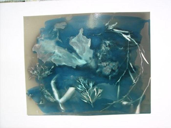 Cyanotype Seaweed 3