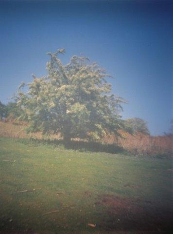 Pinhole Hawthorne Corstorphine Hill Edinburgh