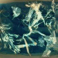 Cyanotype Pict 0898