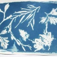 Cyanotype Seaweed Ballet