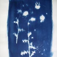 Cyanotype Thistledown