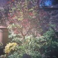 Pinhole My city garden