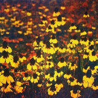 Casein pigment print Field of yellow