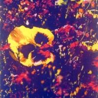 Casein pigment print Floral Flower Garden on Omega Road