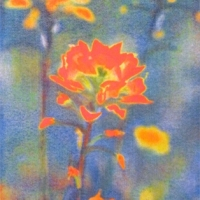Casein pigment print Floral Indian Paintbrush