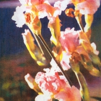Casein pigment print Floral Irises Along Garland Avenue