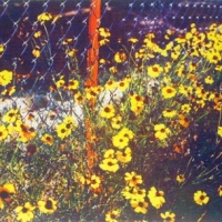 Casein pigment print Floral Yellow Stems Along Brand Road