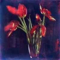 Gum bichromate Six Tulips