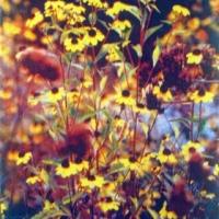 Casein pigment print Floral August