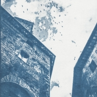 Cyanotype Birds