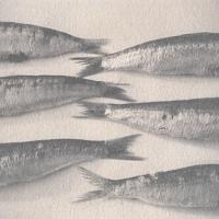 Vandyke Fish