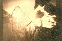 Cyanotype Untitled 2