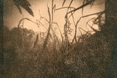 Cyanotype Untitled 3