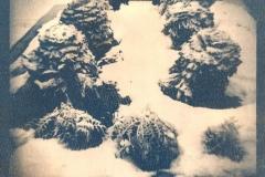 Cyanotype Untitled 5