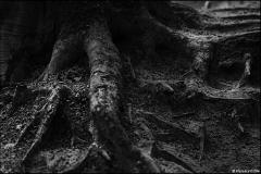 Carbon print Florence D'elle Our Roots