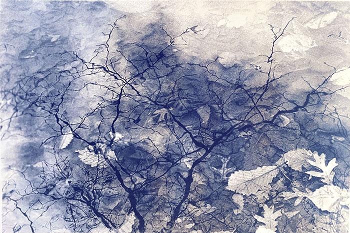 Cyanotype-Wet-Winter