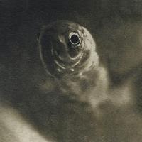 Coffe toned cyanotype Rudy