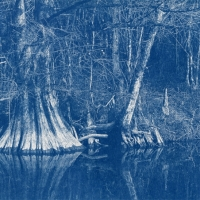Cyanotype Cooters Pond