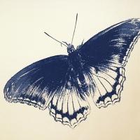 Cyanotype Posing Butterfly