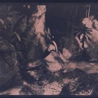Cyanotype Old Palmiary Walbrzych