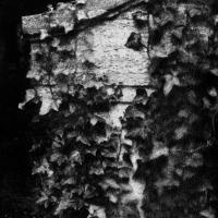 Gum bichromate Cemetery 04