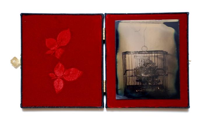 Tintype dryplate Birdcage