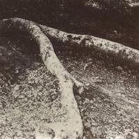 Saltprint Fork