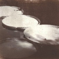 Saltprint Plates