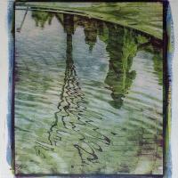 Casein-Bichromate-Reflection-Tree