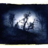 Cyanotype-Siding-Trees