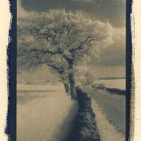 Cyanotype-Spring-toned-cyanotype