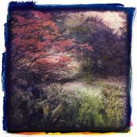 Gum-Bichromate-Whirlow-Gardens