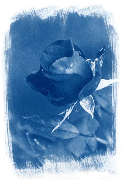 Cyanotype Dark Beauty