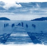 Cyanotype Lonely Dock