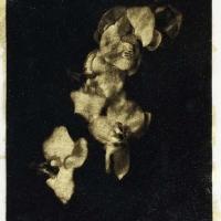 Palladium Golden Orchids